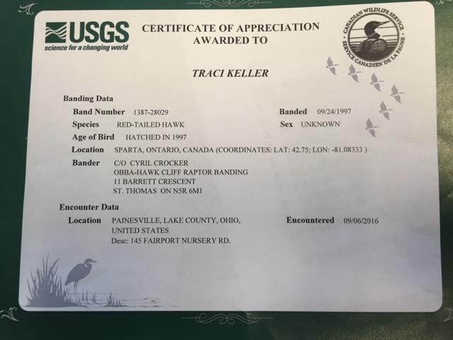 Caring for an Injured Red Tail Hawk at Lake Metroparks | Lake Metroparks