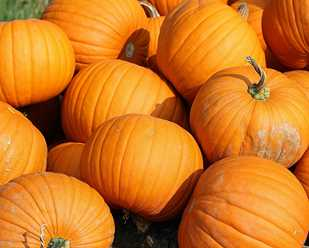 Pumpkins: A Holiday Icon from the Garden