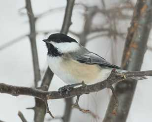 Cold Weather Birding Report