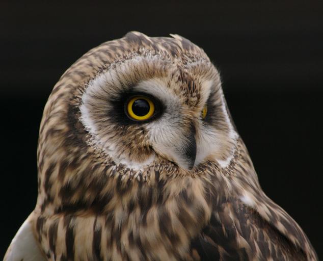 Kevin p clinton wildlife center