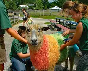 Sheep Shearing & Fiber Arts Weekend