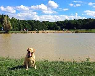 Canine Meadow pond closures