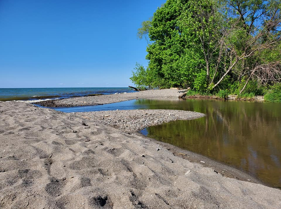 Arcola Creek Park - creek - estuary - Lake Erie - summer - Lake Metroparks - Photo by Tom Paluch