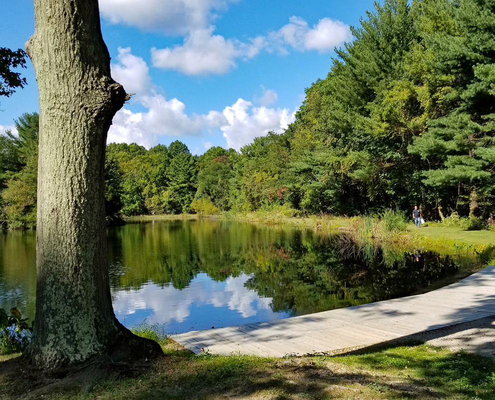 Blair Ridge Park - trees - pond - Lake Metroparks