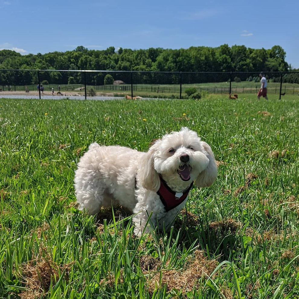 Canine Meadow Dog Park - dogs - Lake Metroparks - photo by Carmella Cadusale