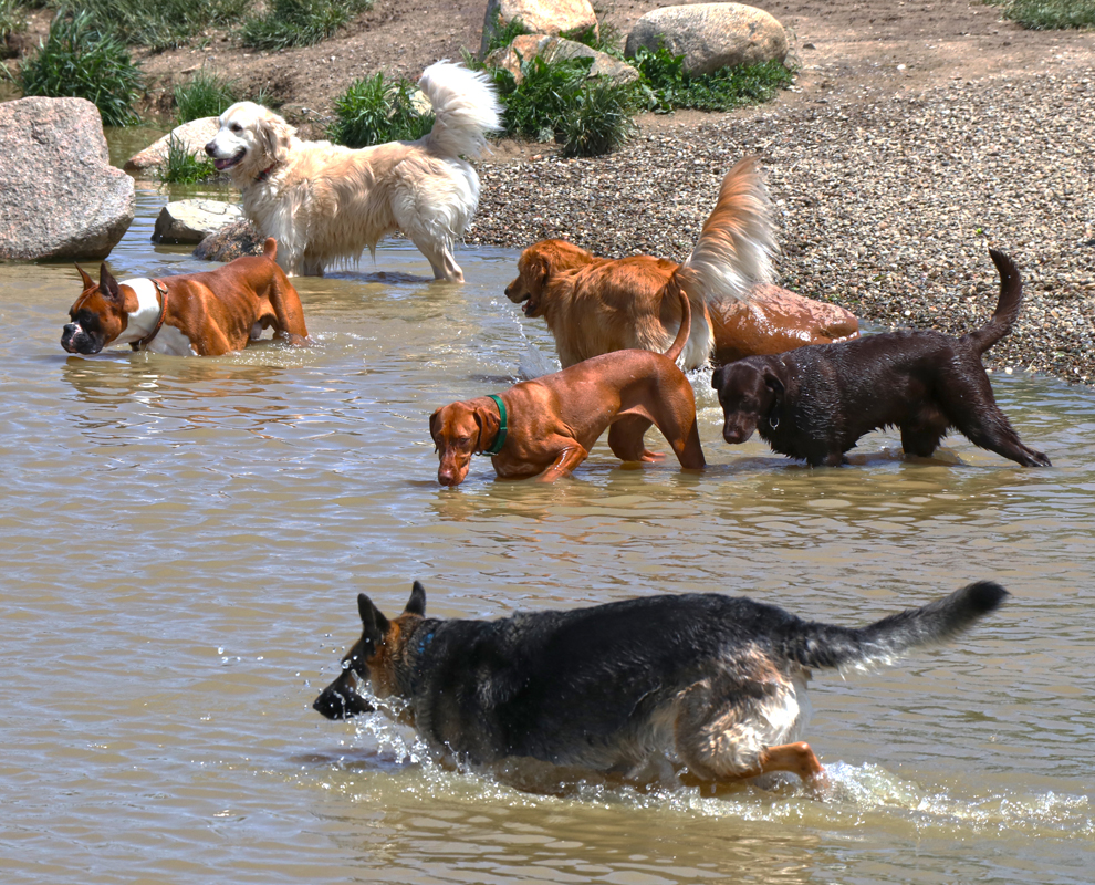 Canine Meadow Dog Park - dogs pond - Lake Metroparks - photo by Jerry Cook