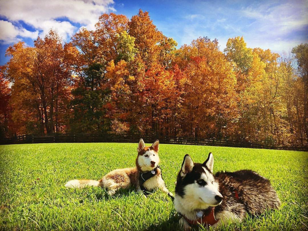 Canine Meadow Dog Park - dogs sitting - trees - fall colors - Lake Metroparks - field - photo by Jerry Cook