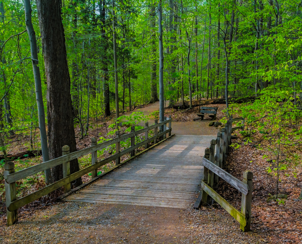 Chapin Forest Reservation - trail - trees bridge - Lake Metroparks - photo by Jim Marquardt