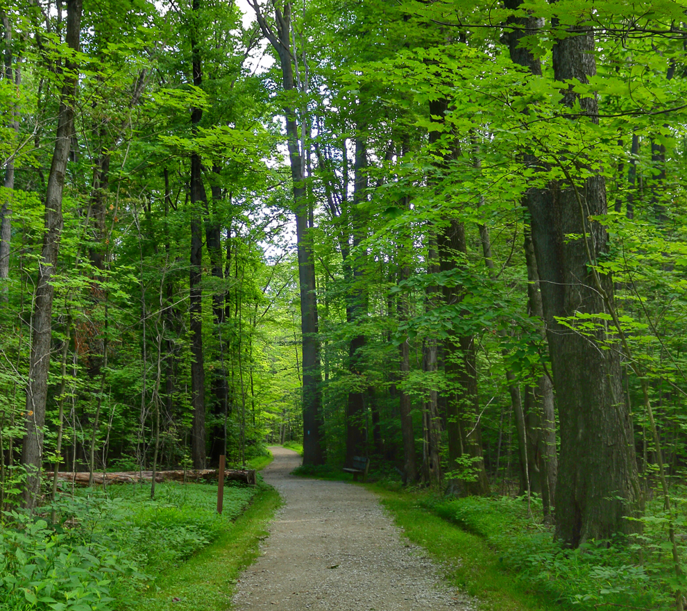 Chapin Forest - hike, scenic overlook, fish, cross-country ski and