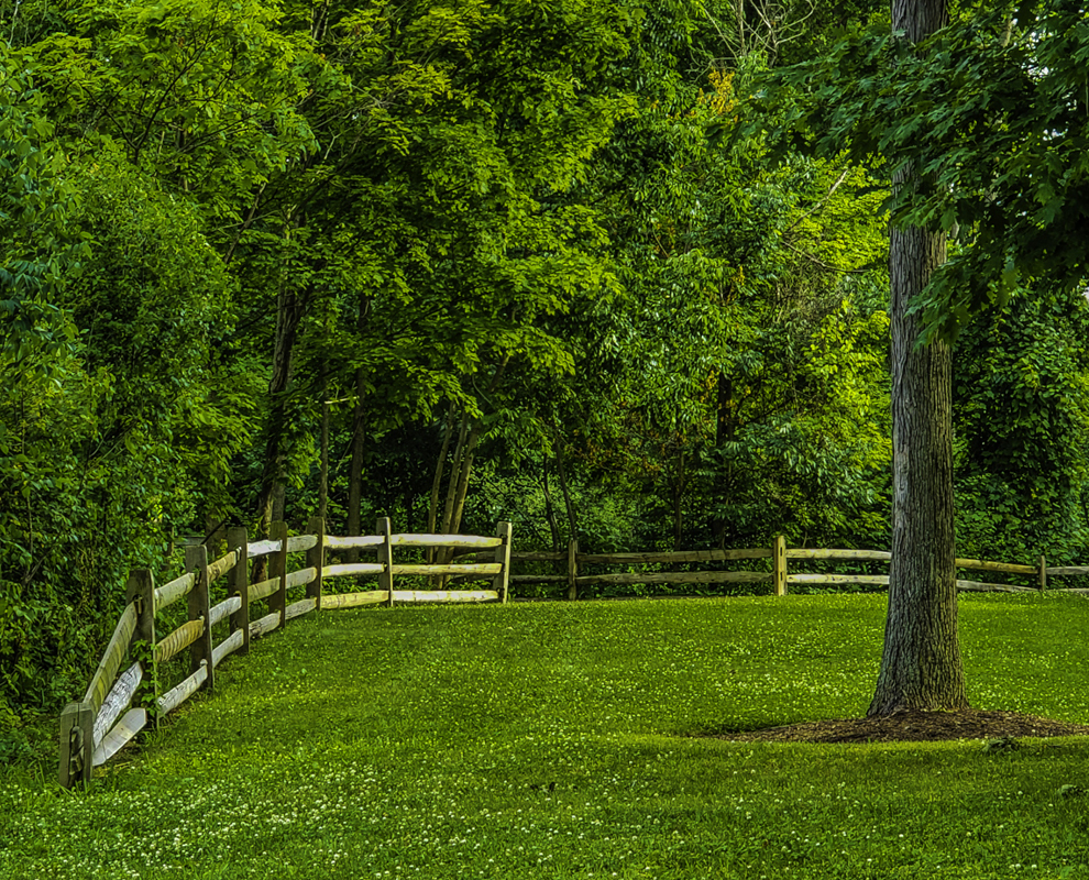 Concord Woods Nature Park - trees - green grass - fence - Lake Metroparks - photo by Jim Marquardt