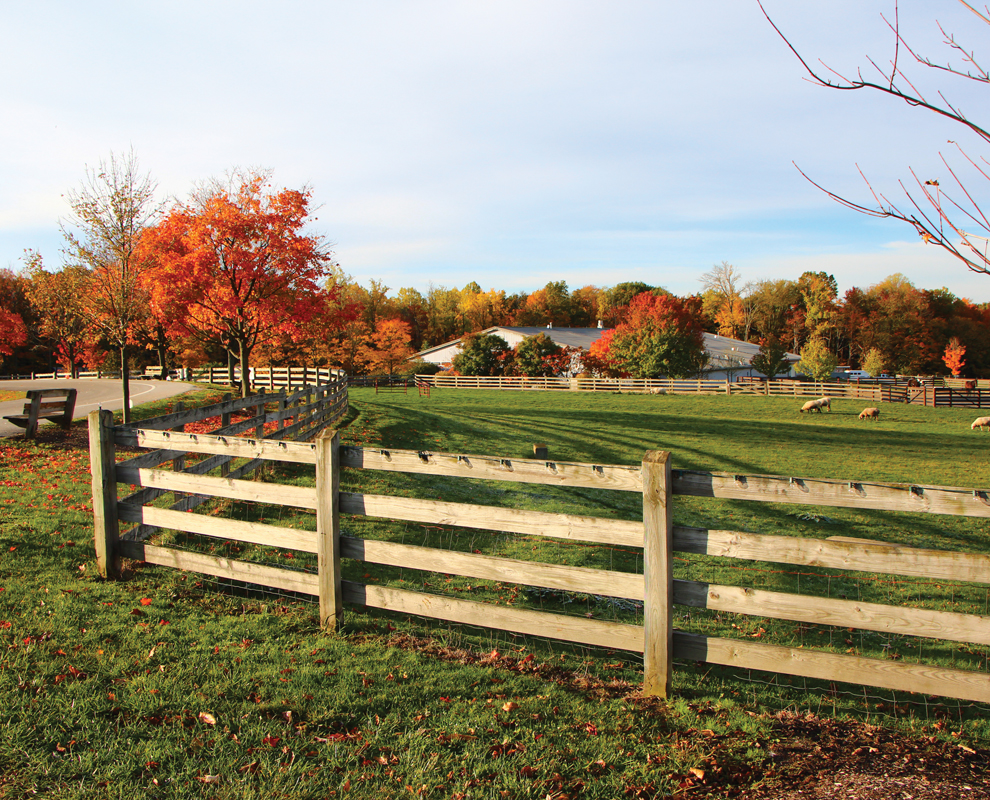 Farmpark - fall colors - field - trees - Lake Metroparks - photo by Earl Linaburg