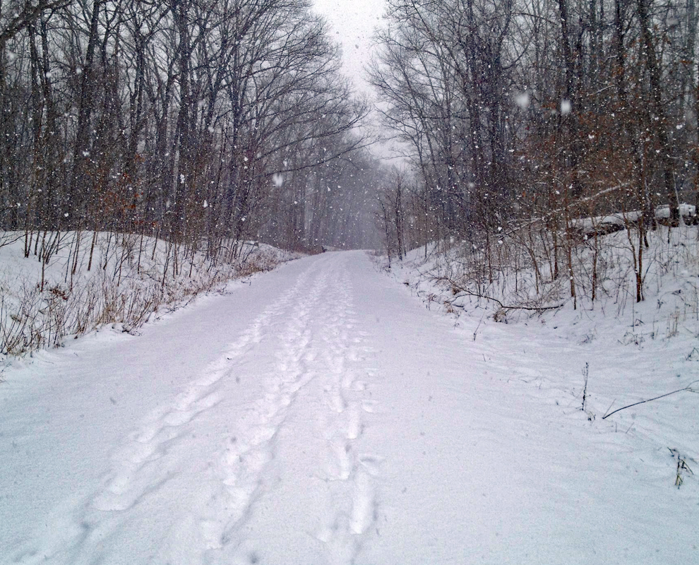 Greenway Corridor - park - trail - winter - trees - Lake Metroparks - photo by Mac Mahafee