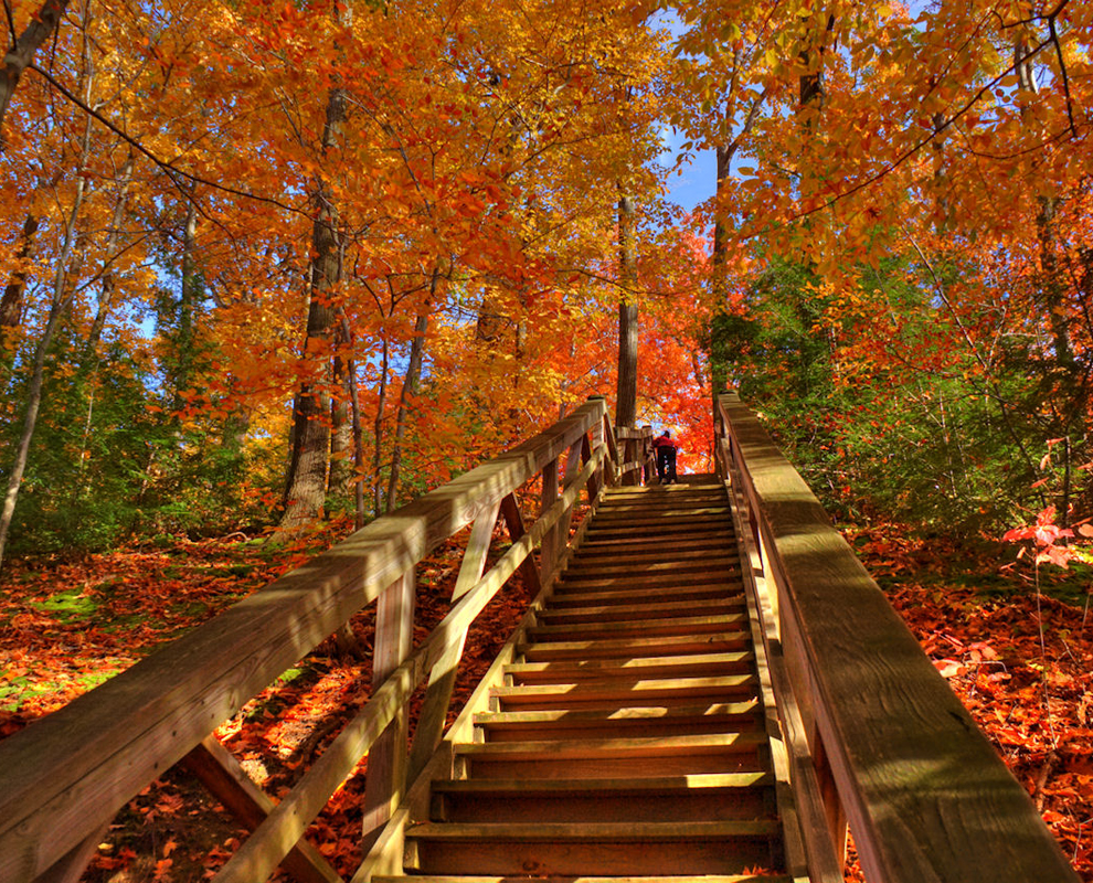 Indian Point Park - trees - fall colors - steps - trail - Lake Metroparks - Jeff Taipale