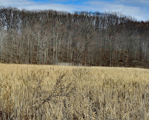 Pete's Pond Preserve - pond - trees - winter - Lake Metroparks - photo by Jim Marquardt