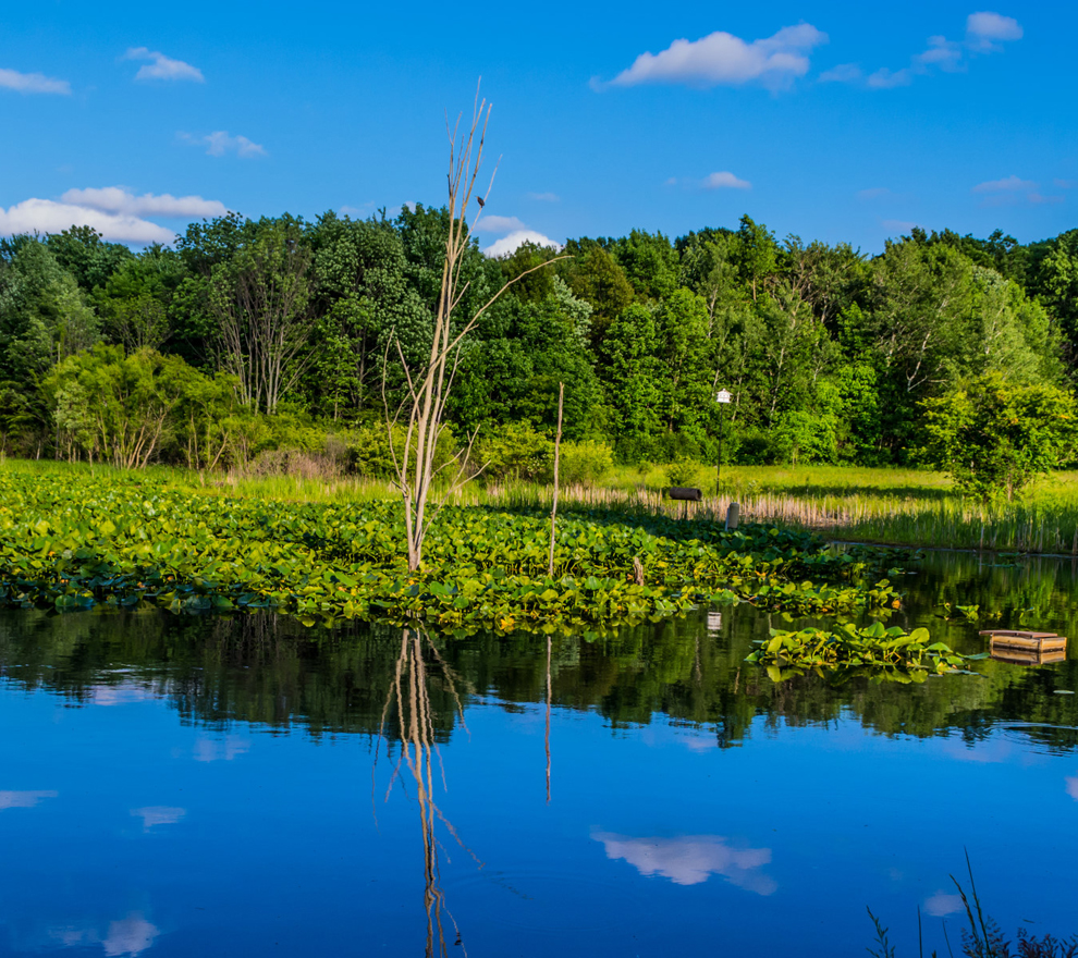 River Road Park - blue sky - trees - pond- Lake Metroparks - photo by Jim Marquardt