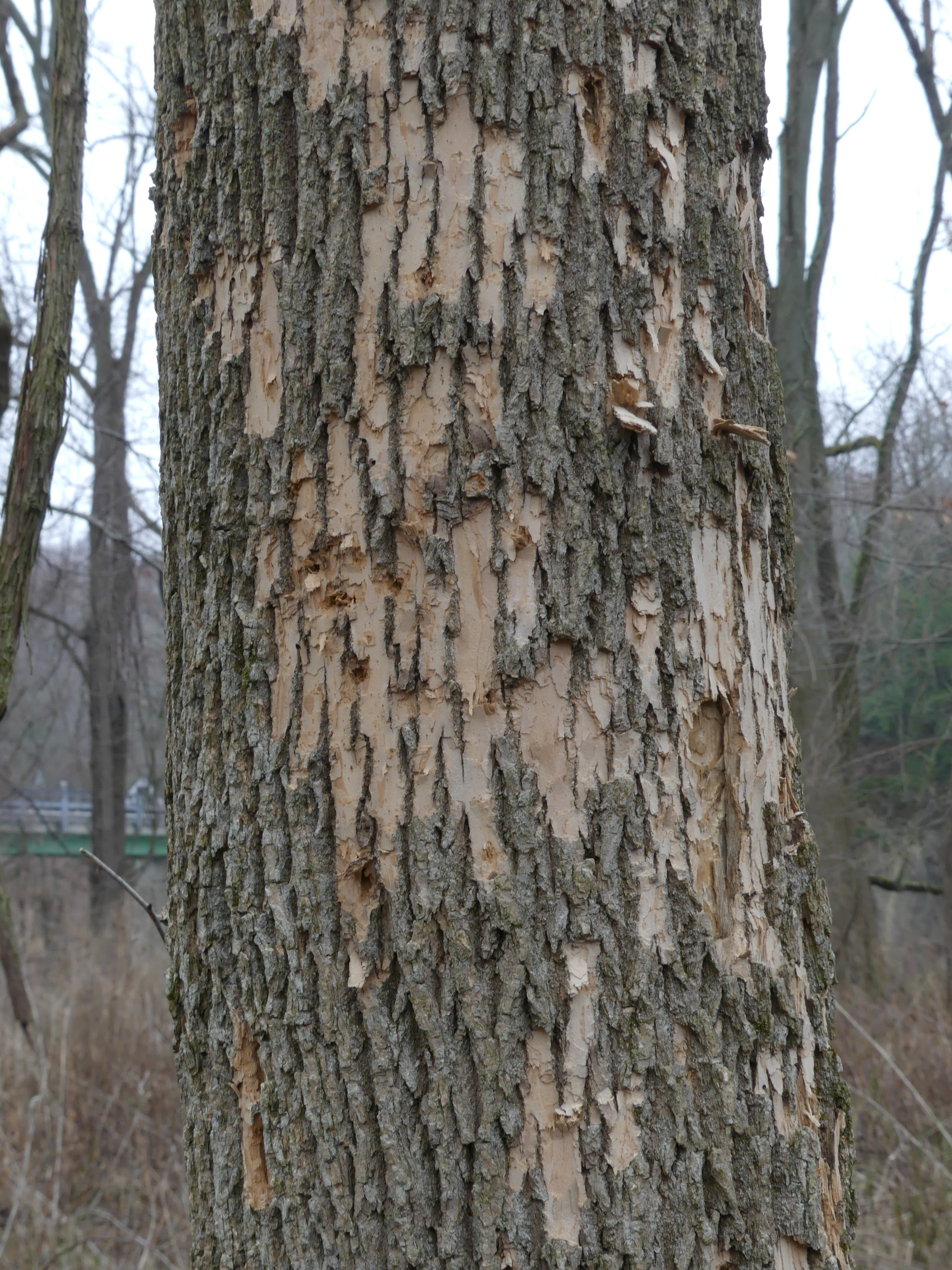 In Three To Four Years Even The Healthiest Tree Is Unable Survive This